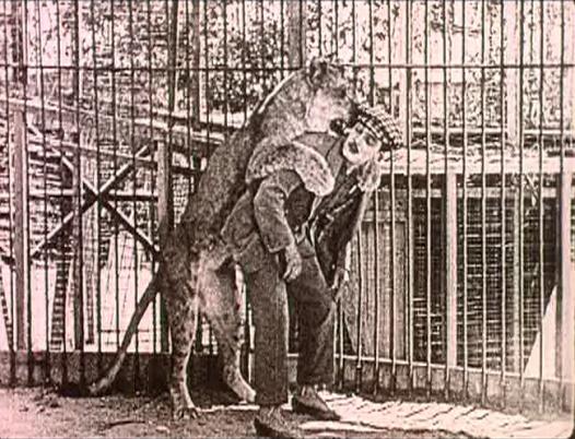 lindercat